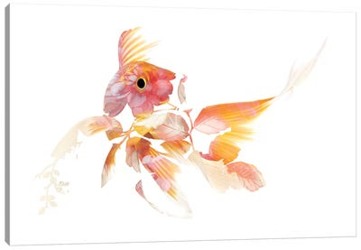 Koi II Canvas Art Print