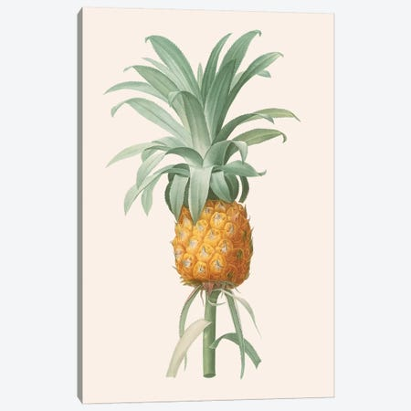 Ananas I Canvas Print #FLB116} by Florent Bodart Canvas Print