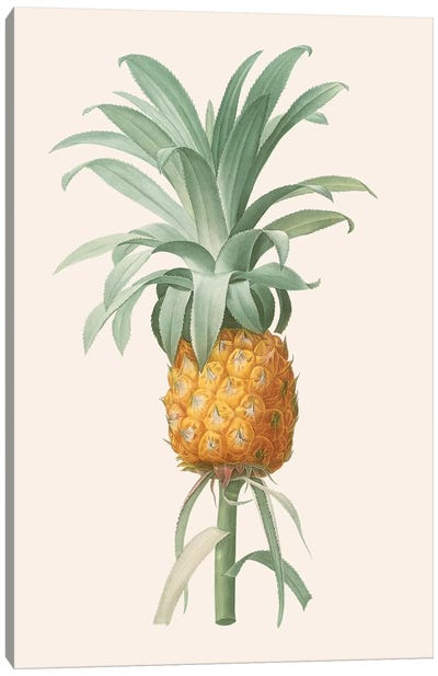 Ananas I Canvas Art Print