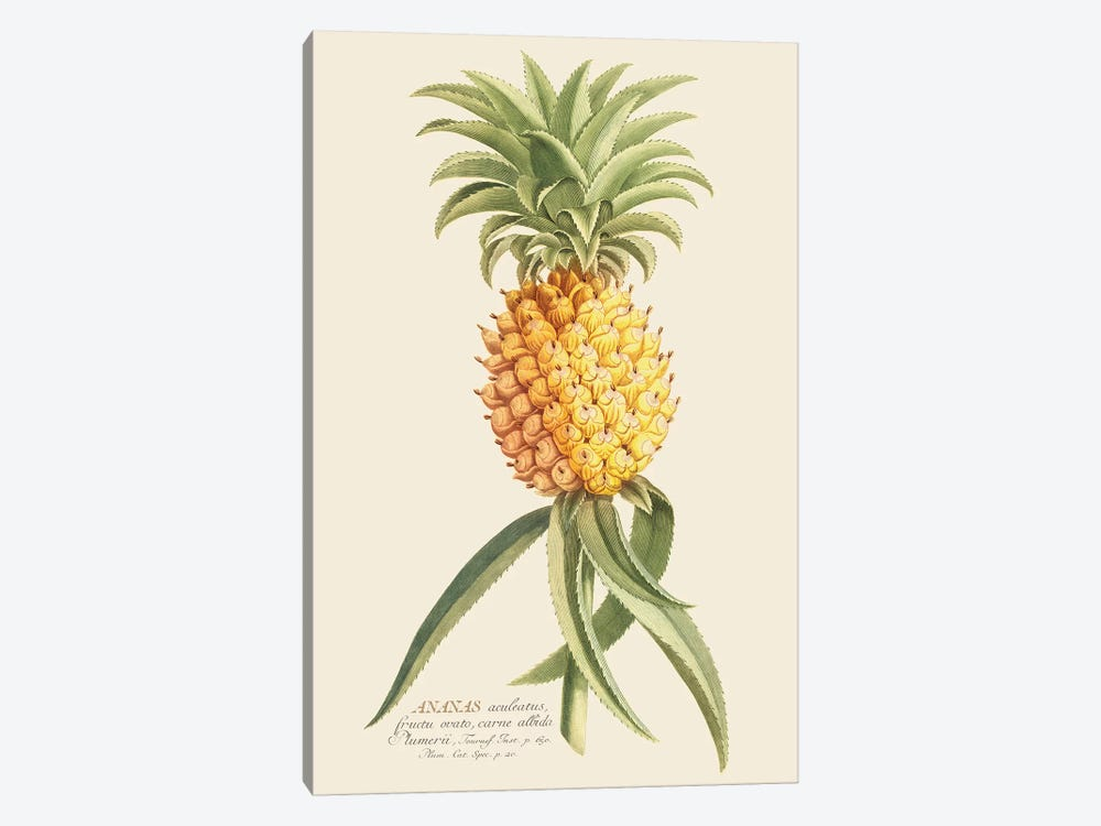 Ananas II by Florent Bodart 1-piece Art Print