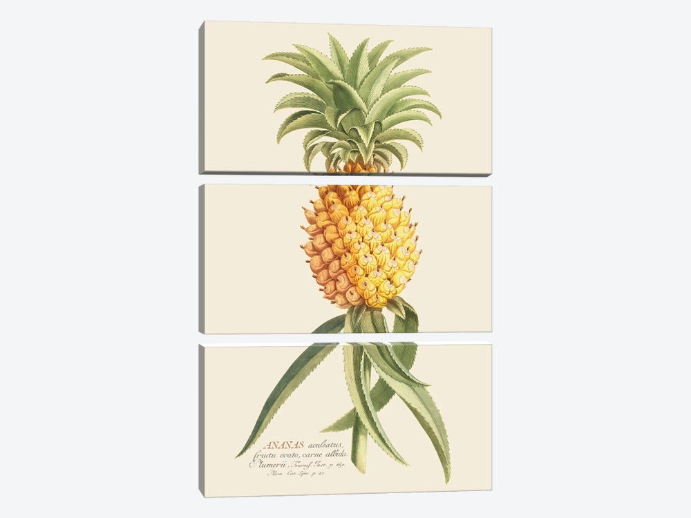 Ananas II by Florent Bodart 3-piece Canvas Print