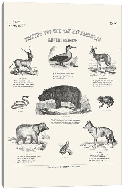 Animals Chart Canvas Art Print