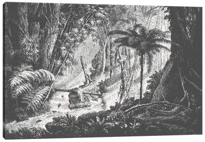 Brazilian Jungle Canvas Art Print