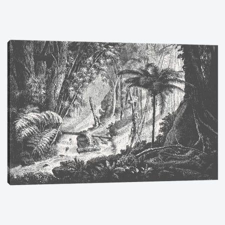 Brazilian Jungle Canvas Print #FLB121} by Florent Bodart Art Print