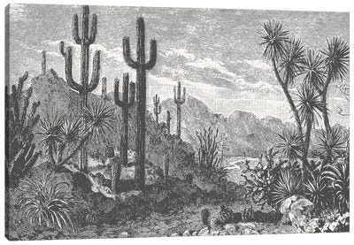 Cactuses In Mountains Canvas Art Print