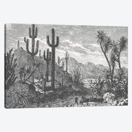 Cactuses In Mountains Canvas Print #FLB122} by Florent Bodart Art Print