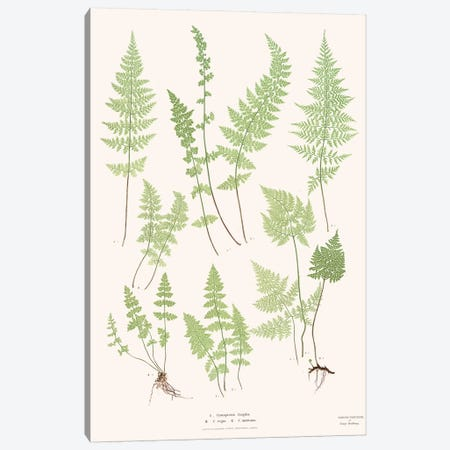 Ferns I 3-Piece Canvas #FLB133} by Florent Bodart Canvas Wall Art