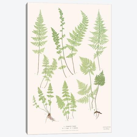 Ferns I Canvas Print #FLB133} by Florent Bodart Canvas Wall Art