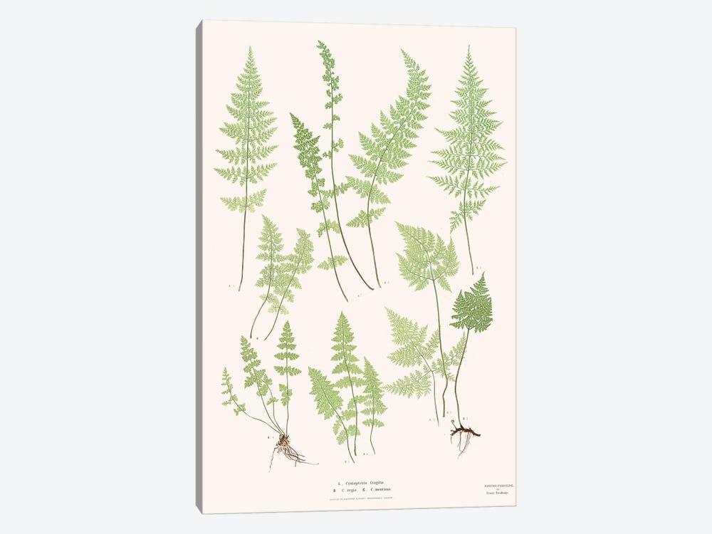 Ferns I by Florent Bodart 1-piece Art Print