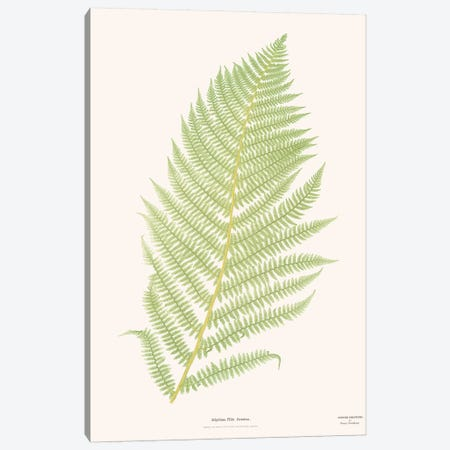 Ferns II Canvas Print #FLB134} by Florent Bodart Art Print