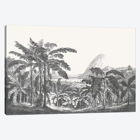 Palms and Mountain Canvas Print #FLB142} by Florent Bodart Canvas Art Print