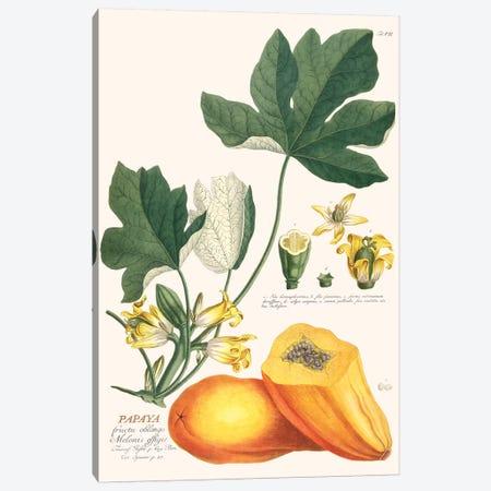 Papaya Canvas Print #FLB144} by Florent Bodart Canvas Artwork