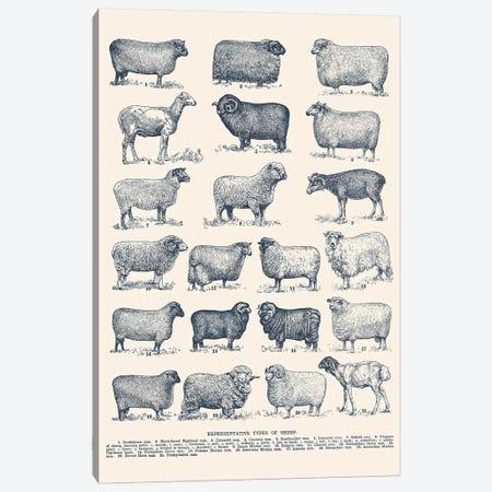 Representative Types of Sheep Canvas Print #FLB145} by Florent Bodart Canvas Art