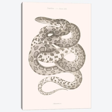 Reptiles - Plate XXII Canvas Print #FLB146} by Florent Bodart Canvas Wall Art