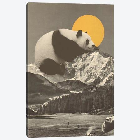 Giant Panda's Nap On Moutain Canvas Print #FLB181} by Florent Bodart Art Print