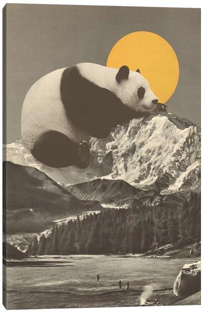 Giant Panda's Nap On Moutain Canvas Art Print