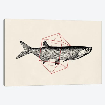 Fish In Geometrics II Canvas Print #FLB36} by Florent Bodart Art Print