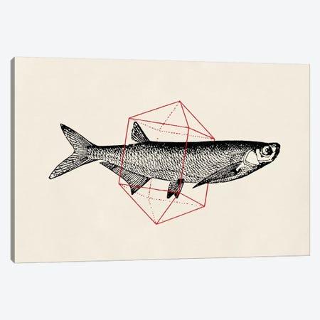 Fish In Geometrics II Canvas Print #FLB36} by Florent Bodart Art Print