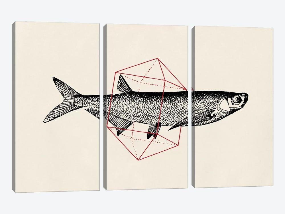 Fish In Geometrics II by Florent Bodart 3-piece Art Print