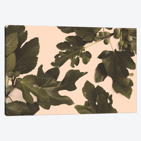Fig Tree Canvas Print #FLB88} by Florent Bodart Canvas Art Print