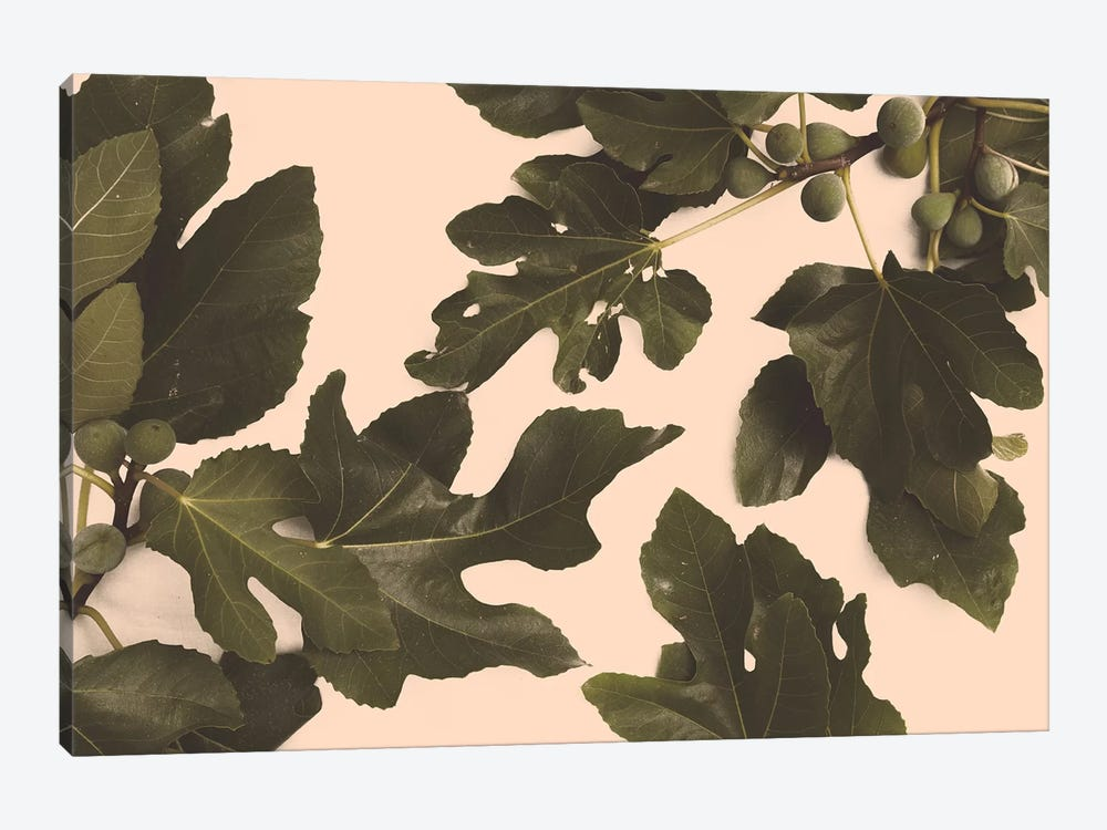 Fig Tree by Florent Bodart 1-piece Canvas Artwork