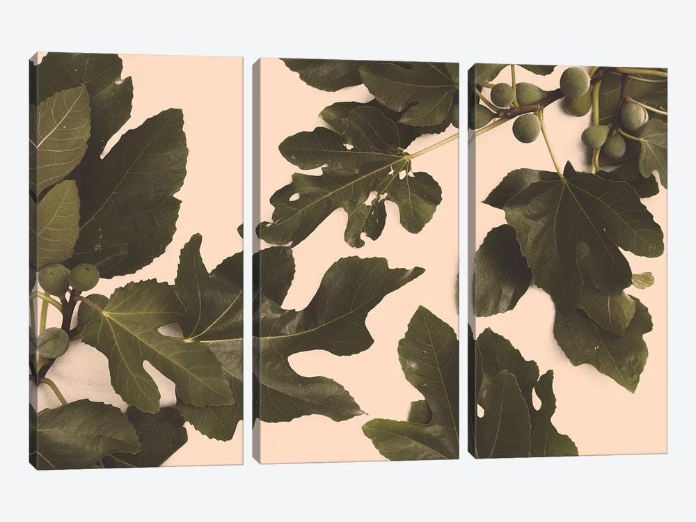 Fig Tree by Florent Bodart 3-piece Canvas Artwork