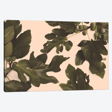 Fig Tree Canvas Print #FLB88} by Florent Bodart Canvas Art Print