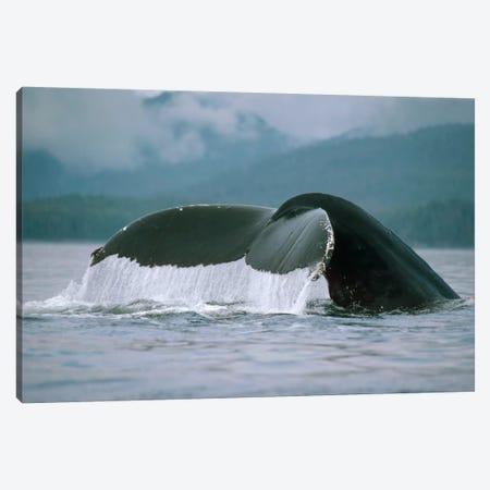 Humpback Whale Tail, Alaska Canvas Print #FLI10} by Flip Nicklin Art Print