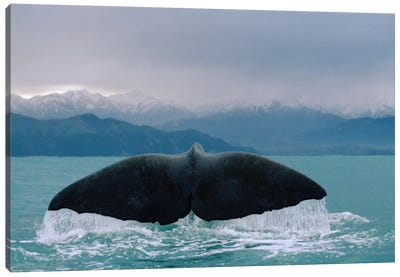 Sperm Whale Tail Canvas Art Print