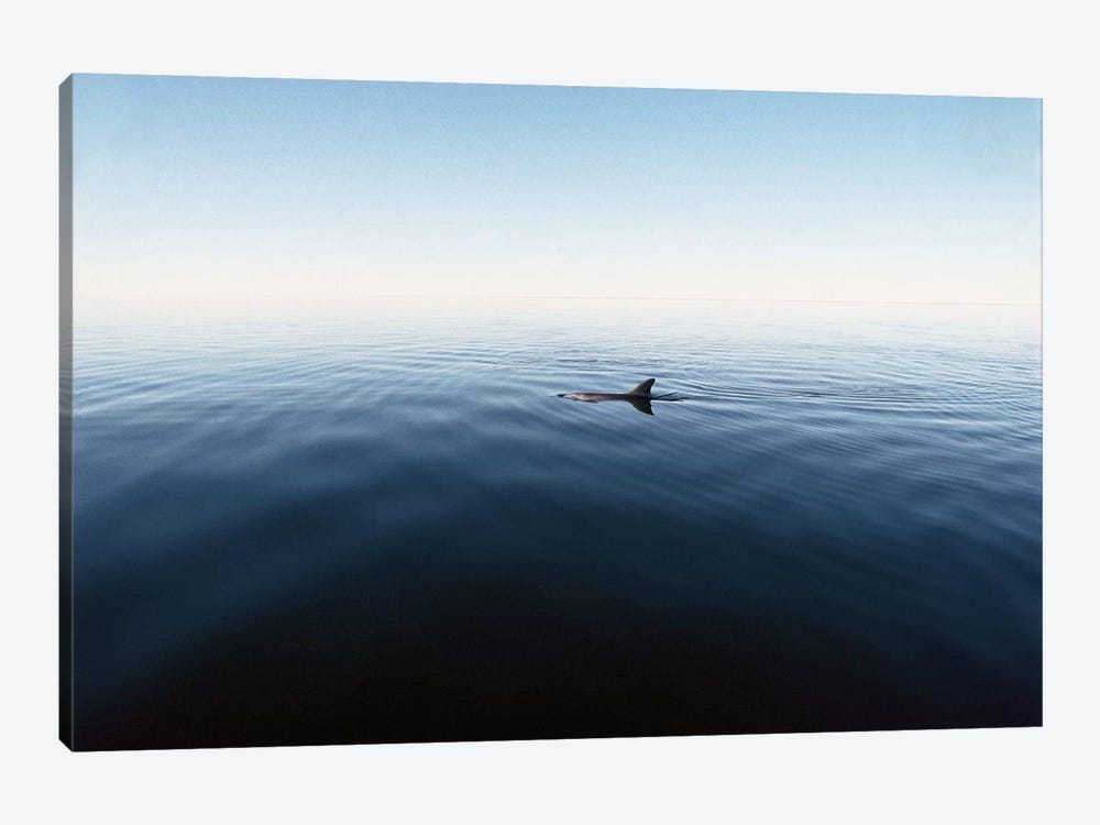 Bottlenose Dolphin Surfacing, Shark Bay, Australia by Flip Nicklin 1-piece Canvas Art