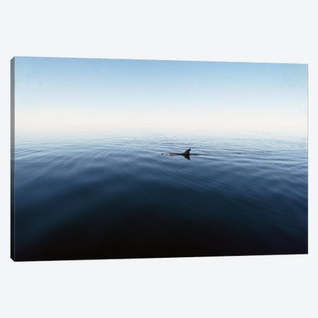 Bottlenose Dolphin Surfacing, Shark Bay, Australia Canvas Print #FLI8} by Flip Nicklin Canvas Artwork