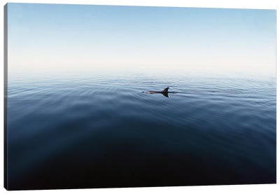 Bottlenose Dolphin Surfacing, Shark Bay, Australia Canvas Art Print