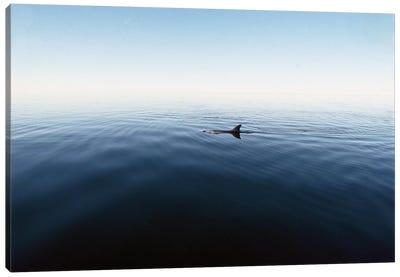 Bottlenose Dolphin Surfacing, Shark Bay, Australia Canvas Art Print