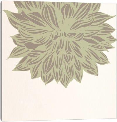 Chrysanthemum (Green) Canvas Print #FLPN138