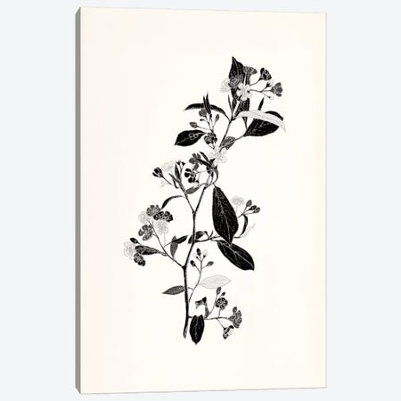 Sprig (Black&White) Canvas Print #FLPN14} by 5by5collective Canvas Artwork