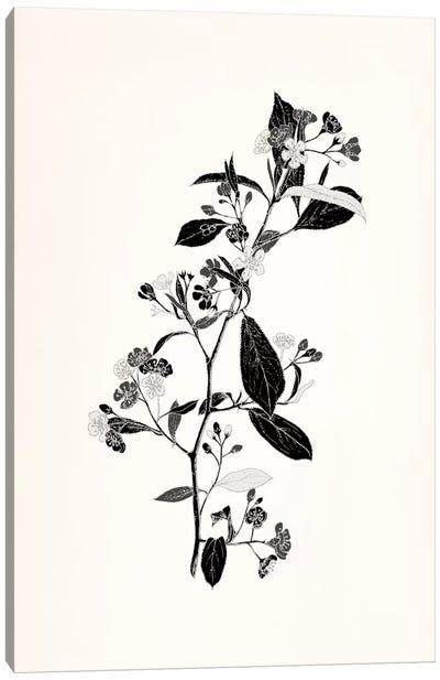 Sprig (Black&White) Canvas Print #FLPN14