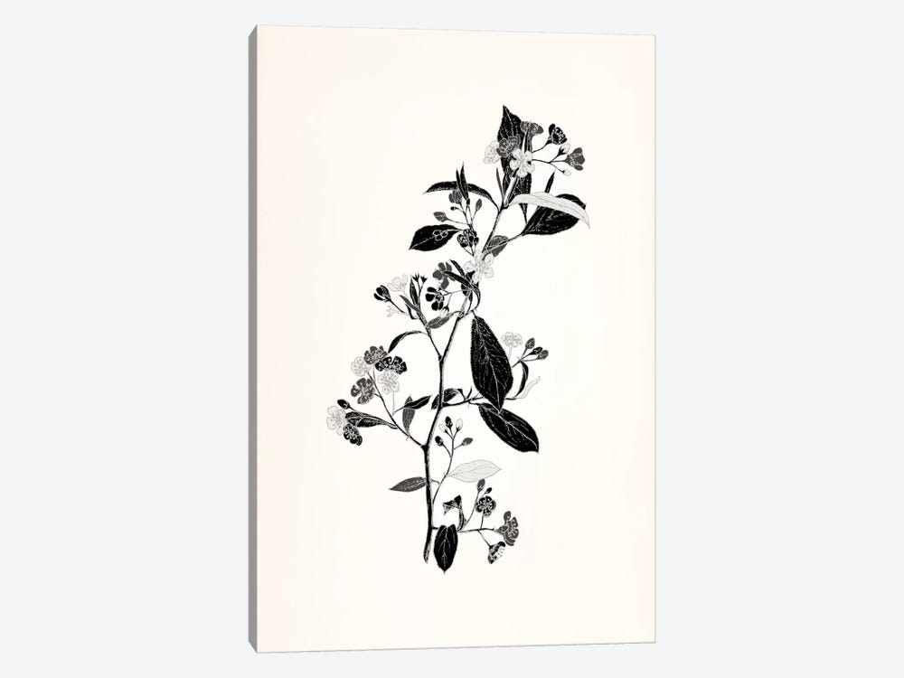 Sprig (Black&White) by 5by5collective 1-piece Canvas Artwork