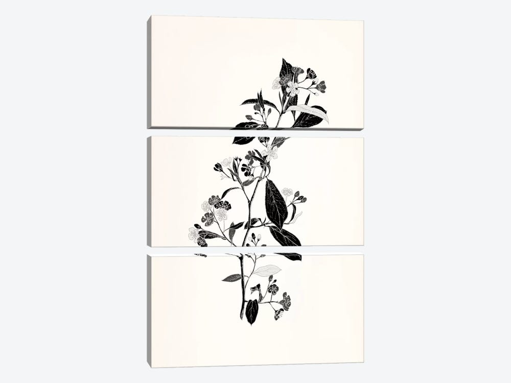 Sprig (Black&White) by 5by5collective 3-piece Canvas Wall Art