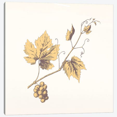Rowan Sprig (Yellow) Canvas Print #FLPN70} by 5by5collective Art Print
