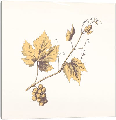 Rowan Sprig (Yellow) Canvas Print #FLPN70
