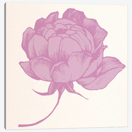 Rose (Pink) Canvas Print #FLPN90} by 5by5collective Canvas Print