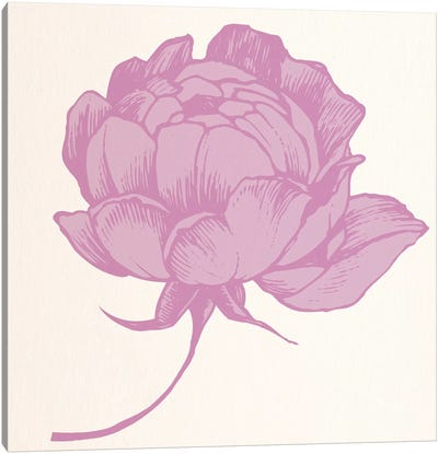Rose (Pink) Canvas Art Print