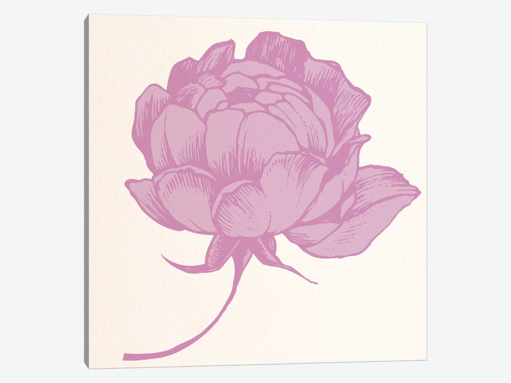 Rose (Pink) by 5by5collective 1-piece Canvas Art