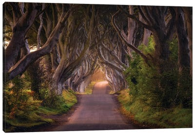The Glowing Hedges Canvas Art Print