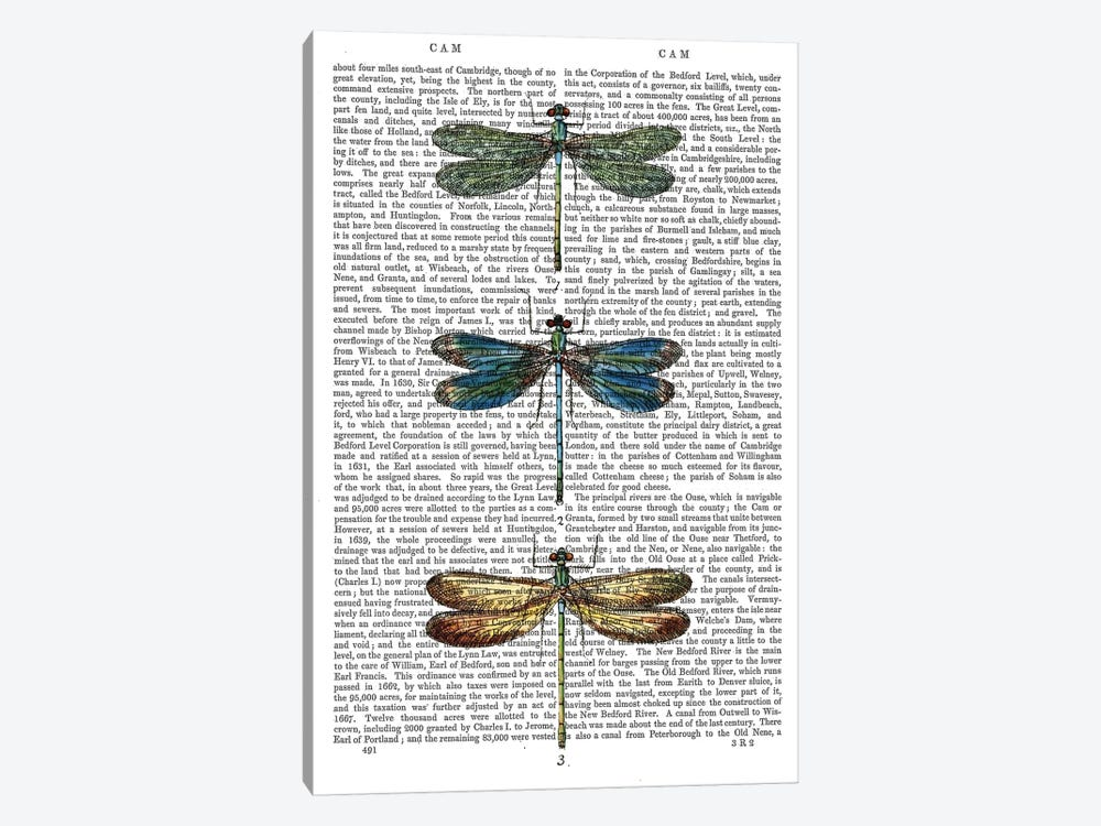 Dragonflies Print I by Fab Funky 1-piece Canvas Art Print