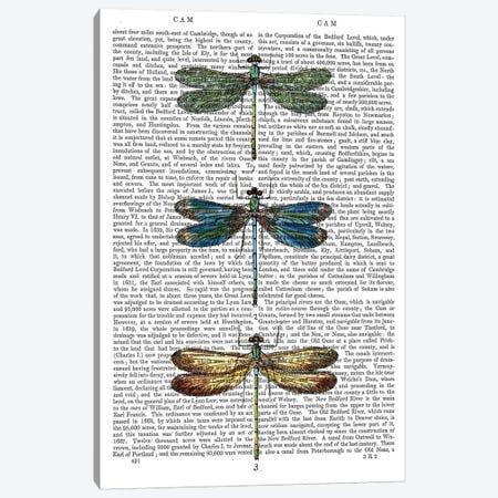 Dragonflies Print I 3-Piece Canvas #FNK1028} by Fab Funky Art Print