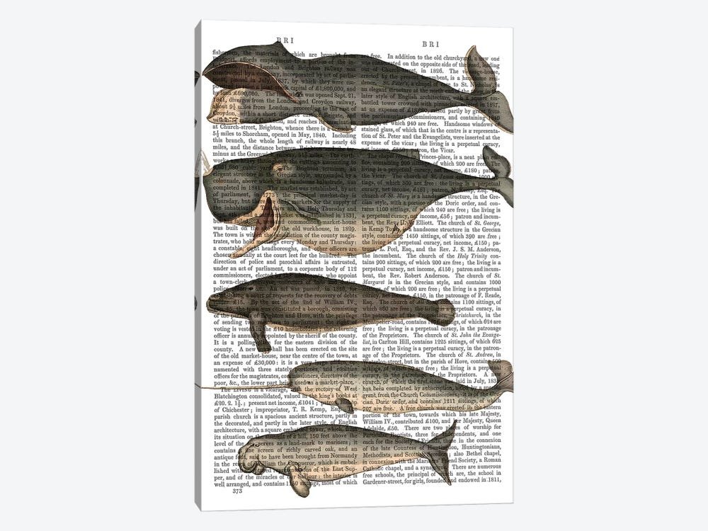 Five Vintage Whales by Fab Funky 1-piece Art Print