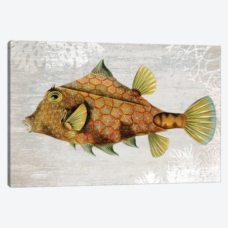 Gold Turret Fish Canvas Print #FNK1078} by Fab Funky Canvas Art