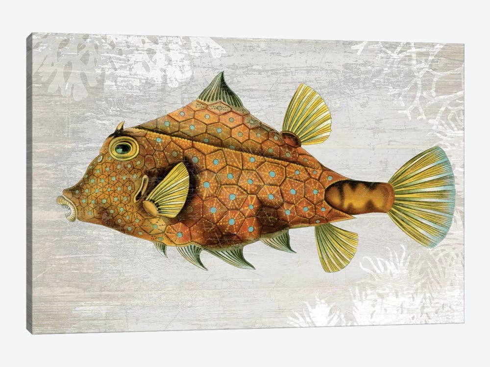 Gold Turret Fish 1-piece Canvas Artwork
