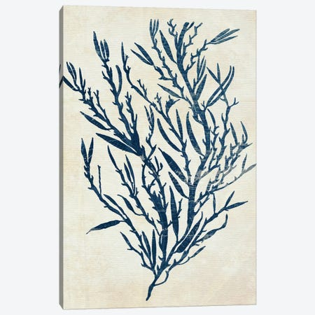 Indigo Blue Seaweed V Canvas Print #FNK1118} by Fab Funky Canvas Print